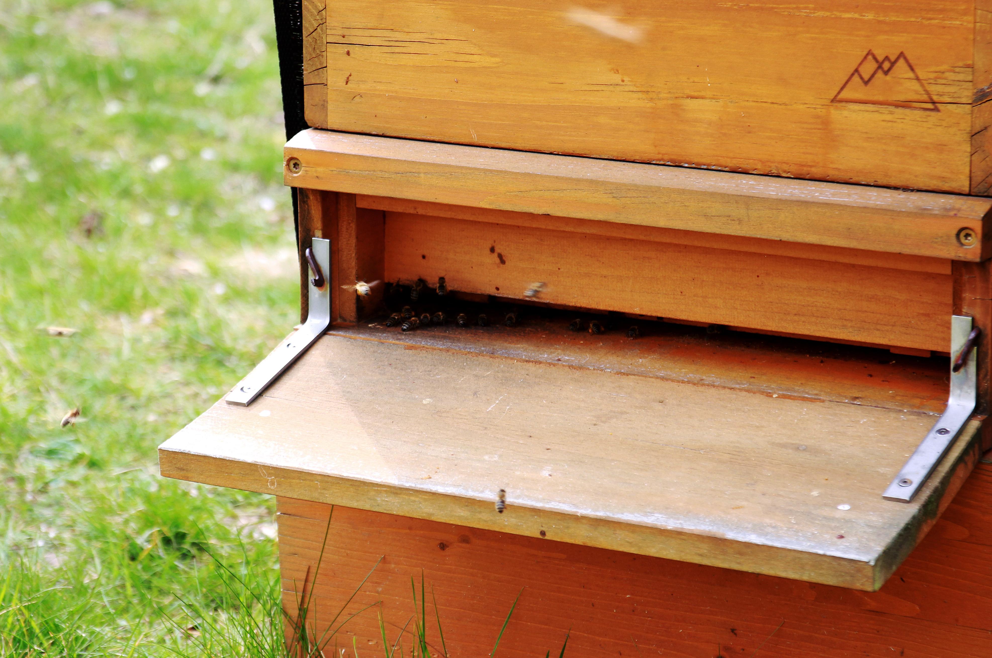 Die Bienen aus dem Stock des Controlware Parks beim Ausschwaermen.